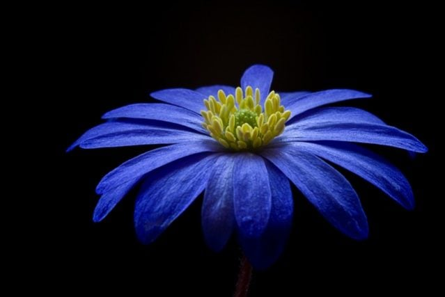 BLIUEのイメージ画像